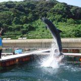 壱岐島にあるイルカパーク♪福岡県のおすすめ穴場スポット