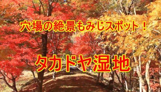 タカドヤ湿地の紅葉がすごすぎる!愛知県豊田市のおすすめ穴場スポット