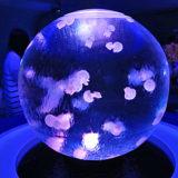 名古屋港水族館&シークトレインランドでロマンチックな思い出を